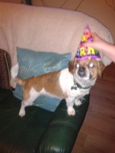 Rosie in her birthday hat